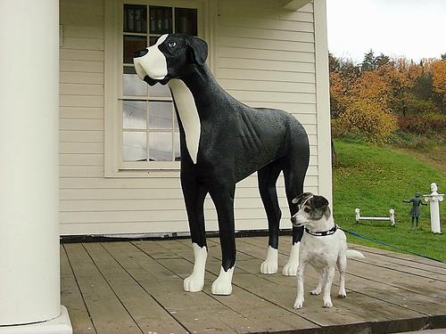 dogmountain1